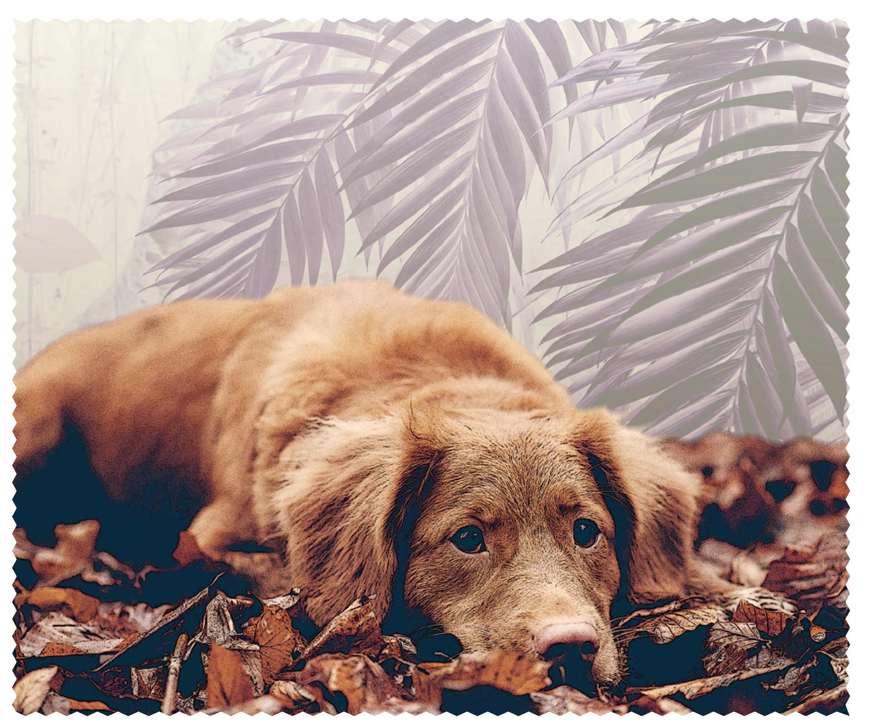 "Picture of Macroclean Microfasertuch ""Hund"", 15 x 18 cm, 100 Stück"